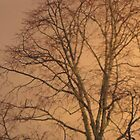Autumn Tree by Elisabeth and Barry King™ by BE2gether