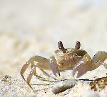 sand crab by Trish Threlfall