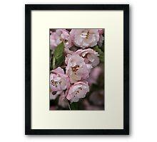 Marshmallow Pink & White Blossom Framed Print