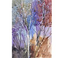Enter these enchanted woods Photographic Print