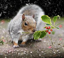 The Christmas Squirrel by Lyn Evans