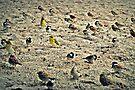 Throwback Beach Birdie by tropicalsamuelv
