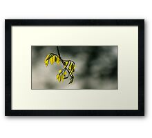 A New Anew Framed Print