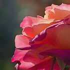 Rosy Palette by photojeanic