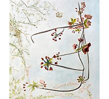 Hanging Cherry Bough Photographic Print