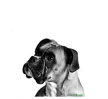 Boxer Dog Black and White by Cre8ive-Edge