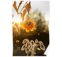 Bernagie flower Poster