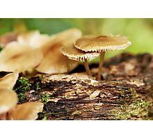 Woodland Crop Photographic Print