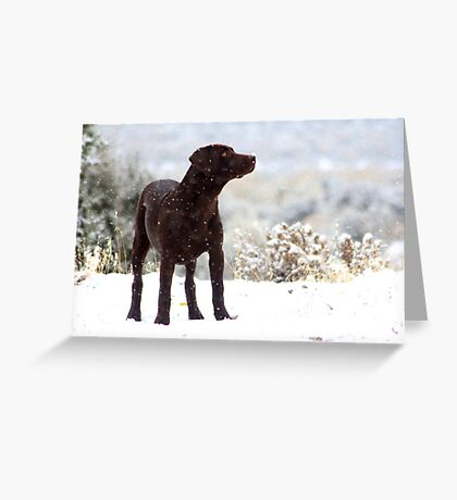The Wonder Of White Greeting Card