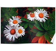 Lensbaby Daisies Poster