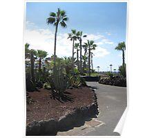 Tenerife Palm Tree Walk Poster