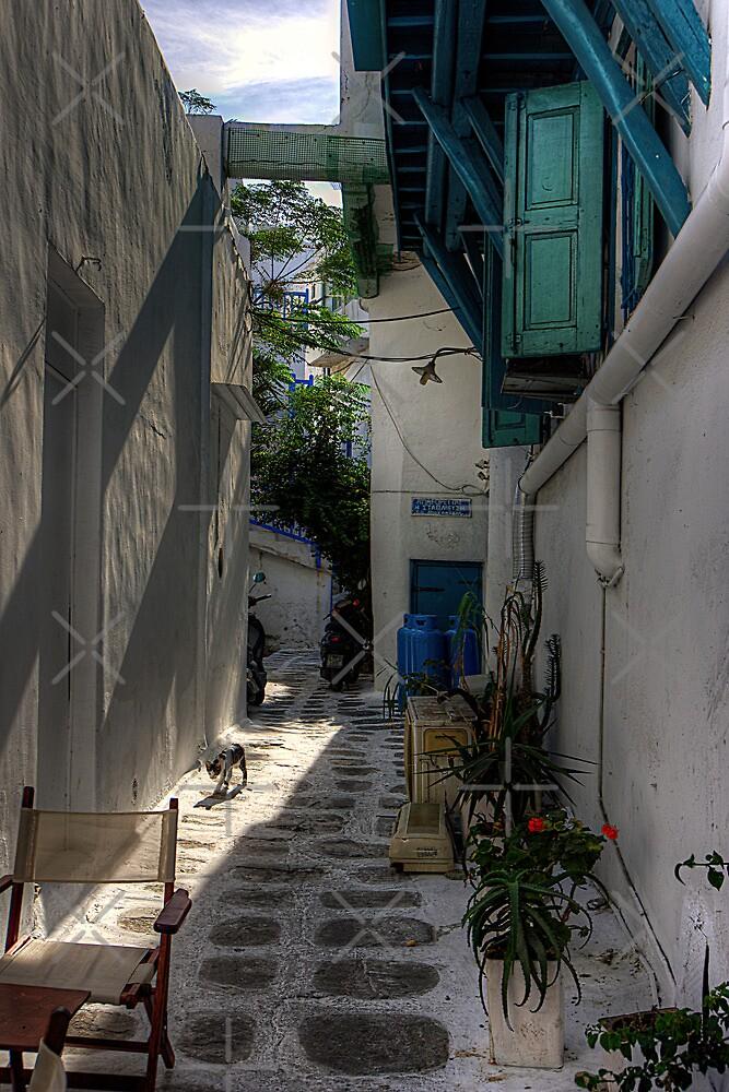 Where cats like to walk by Tom Gomez