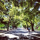 Spring at UC Davis by omhafez