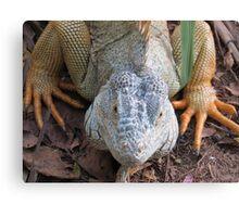iguana royal Canvas Print