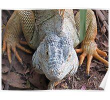 iguana royal Poster