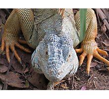 iguana royal Photographic Print