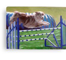 Australian Shepherd Agility Metal Print