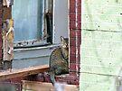 Window Cat by Susan S. Kline