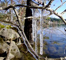 winter icicles - photo by Robert Skelly by axieflics