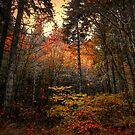 Someone Throw The Switch ~ Fall Colors ~ by Charles & Patricia   Harkins ~ Picture Oregon