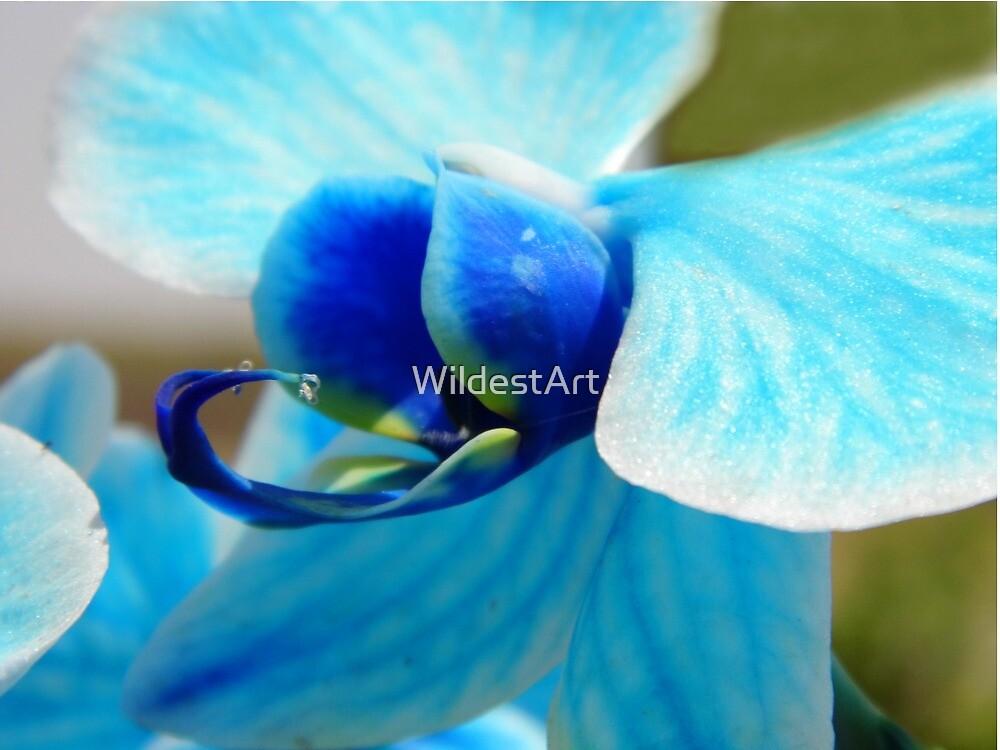 Blue Orchid by WildestArt