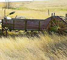 on the prairies by axieflics