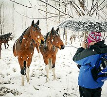 curious horses - photo by Robert Skelly by axieflics