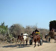 Madagascar Transport by Sauropod8