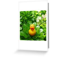 Felix - Green Greeting Card
