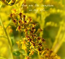 you are my sunshine - greeting card by Scott Mitchell