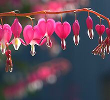 Bleeding Hearts by Kathi Arnell