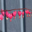 String of Hearts by Kathi Arnell