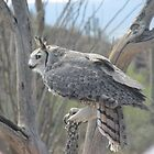 Great Horned Owl by Ingasi