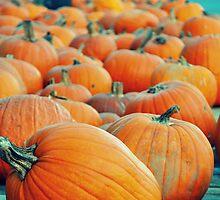 Pumpkins by CreativeKitty