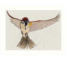 Flying Sparrow Art Print
