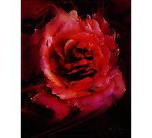 Rosemeld Photographic Print
