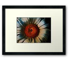 Sunflowerlock Framed Print