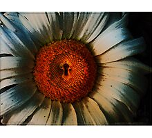 Sunflowerlock Photographic Print