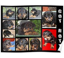 Rottweiler With Got Rott? Message Collage Poster