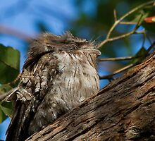 Windblown And Dishevelled by byronbackyard
