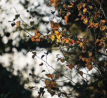 Last days of Autumn by Anne Staub