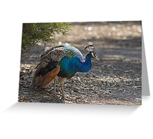 Lonely peacock Greeting Card
