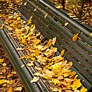 Sit and Enjoy the Fall by Rae Tucker