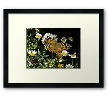 Meadow Argus on Chalet Daisies Framed Print