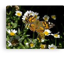 Meadow Argus on Chalet Daisies Canvas Print