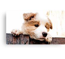 sweet Border Collie Puppy  Canvas Print