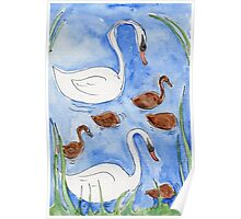 Family of Swans at Breakfast Poster