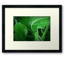 How Green the Leaves of Gardens Grow Framed Print