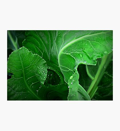 How Green the Leaves of Gardens Grow Photographic Print