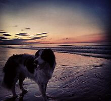 Sunset Collie by callumthompson